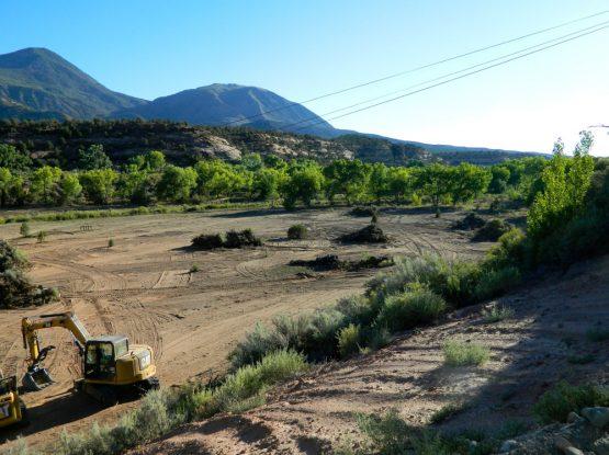 Brush & Land Clearing